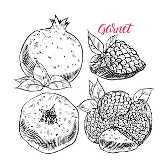 Zestaw świeży i soczysty granat z pestkami. ręcznie rysowane ilustracji