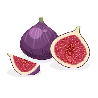 Zestaw świeżych całe, pół, pokrojone plastry i kawałek fig na białym tle. wegańskie ikony żywności w modnym stylu kreskówki. zdrowa koncepcja.