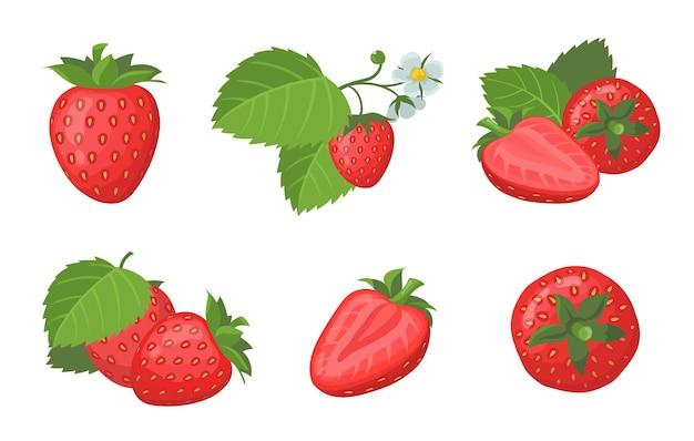 Zestaw świeżych dojrzałych truskawek. całe i pokrojone soczyste czerwone letnie jagody z liśćmi na białym tle. płaska ilustracja
