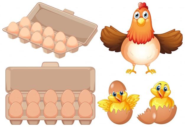 Zestaw świeżych jaj i kurczaka