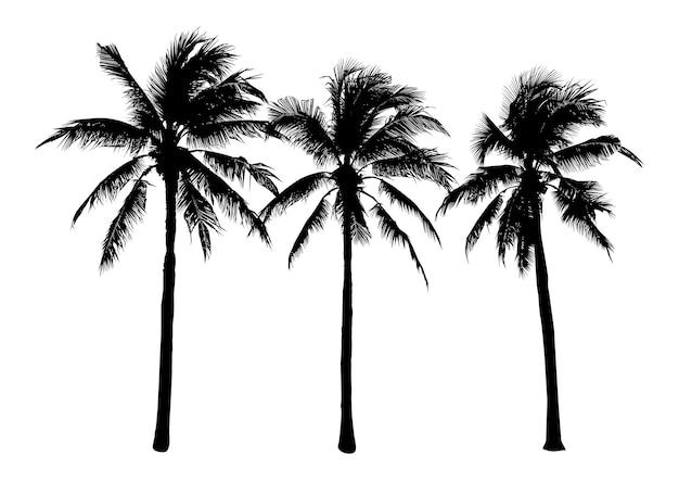 Zestaw sylwetki drzew kokosowych