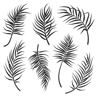 Zestaw sylwetki liści palmowych na białym tle