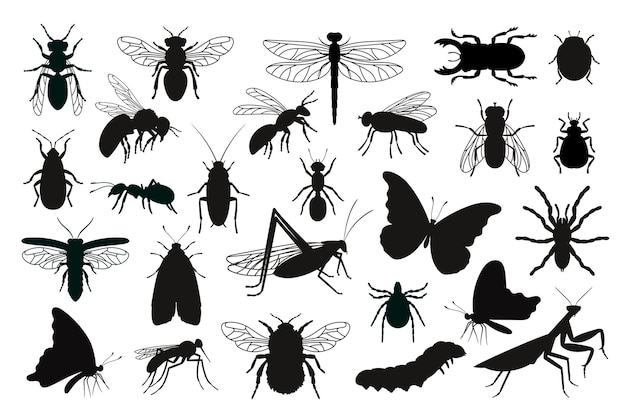 Zestaw sylwetki owadów. czarne szablony kształty błędów, zarys stworzeń entomologii nauki, wektor ilustracja kontury chrząszczy na białym tle