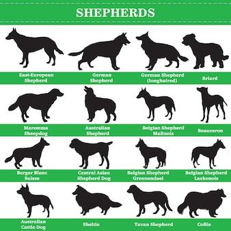 Zestaw sylwetki ras psów pasterzy. ilustracja wektorowa na białym tle.