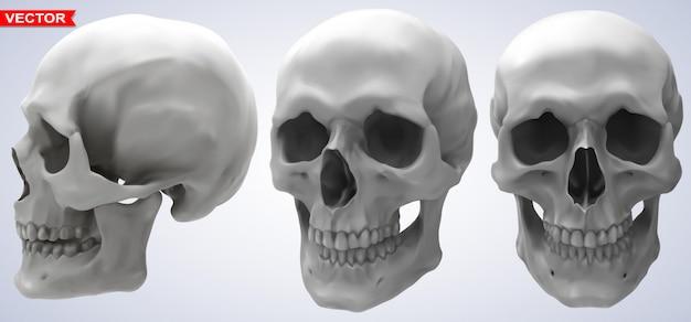 Zestaw szczegółowych fotorealistycznych ludzkich czaszek