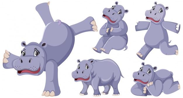 Zestaw szczęśliwych hipopotamów