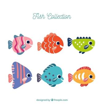 Zestaw sześciu kolorowych ryb