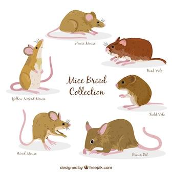 Zestaw sześciu ras myszy