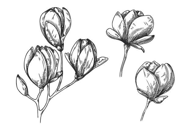 Zestaw szkic kwiatów na białym tle