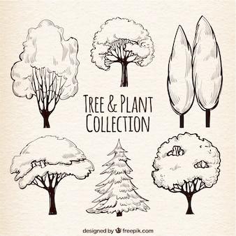 Zestaw szkice drzew