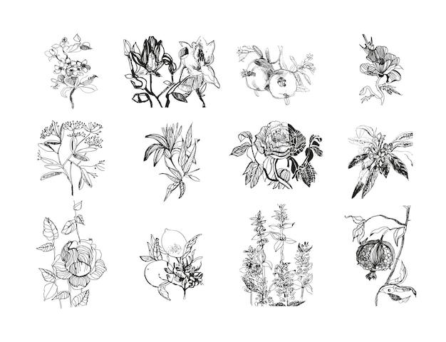 Zestaw szkiców kwiatów i owoców