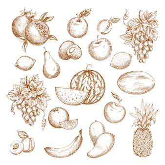Zestaw szkiców owoców.