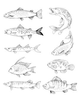 Zestaw szkiców ryb, łososia, pstrąga, szczupaka. ręcznie rysowane kontury wektorowe z przezroczystym tłem
