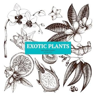 Zestaw szkicu roślin tropikalnych. ręcznie zarysowane egzotyczne kwiaty, owoce, rośliny ilustracje