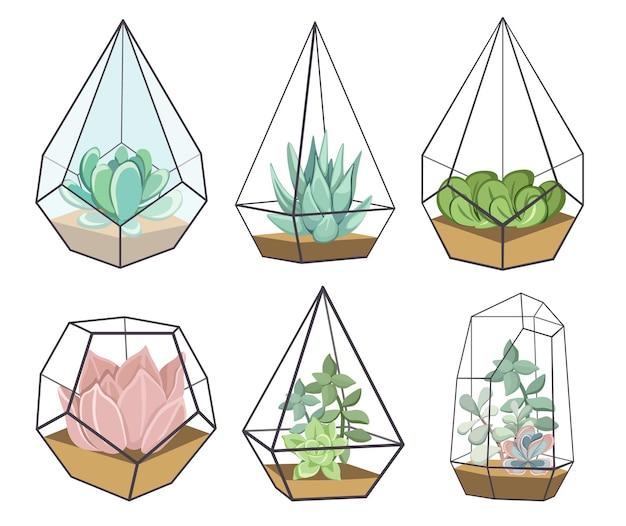 Zestaw szklanych wazonów florarium z sukulentami, małe ogrody z miniaturowym sukulentem. domowe pojemniki diy o geometrycznych kształtach do uprawy kwiatów. ilustracja kreskówka wektor