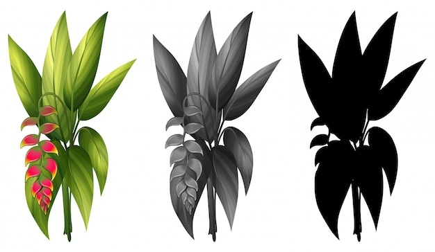 Zestaw tej samej rośliny