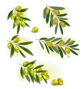 Zestaw tła z zielonymi oliwkami