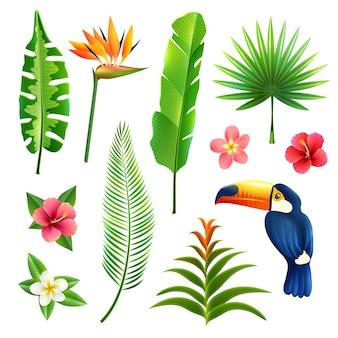 Zestaw tropikalny liści