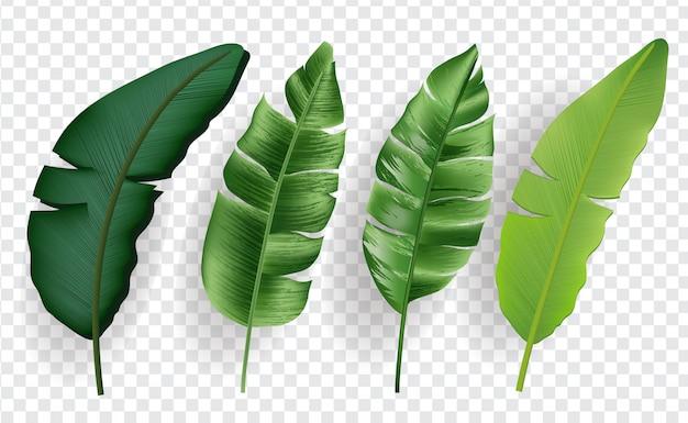 Zestaw tropikalny liści na białym tle