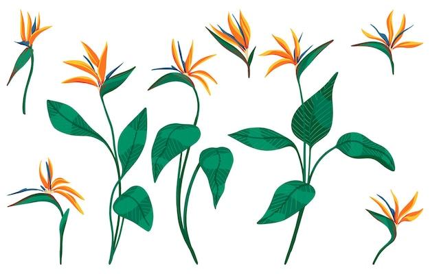 Zestaw tropikalnych kwiatów strelitzia reginae. kolekcja egzotycznych roślin. ręcznie rysowane ilustracji wektorowych. clipart botaniczny na białym tle. jasne elementy do projektowania.