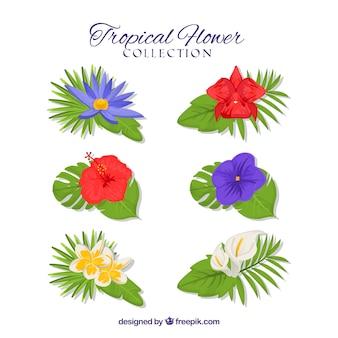 Zestaw tropikalnych kwiatów