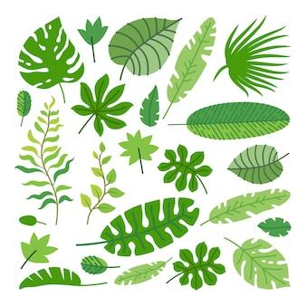 Zestaw tropikalnych liści. kreskówka liście lasów deszczowych na białym tle