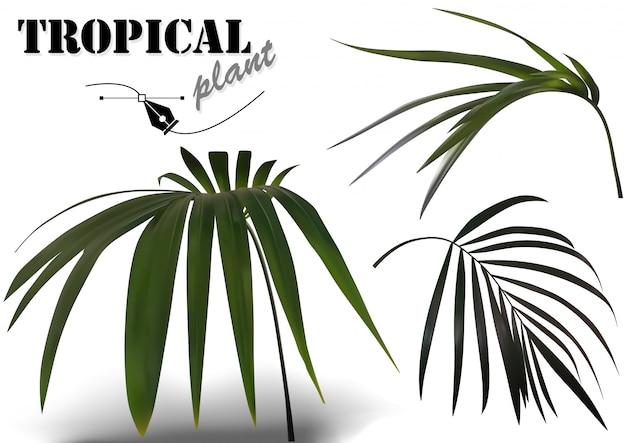 Zestaw tropikalnych liści palmowych - ilustracje roślin fotorealistycznych i szczegółowych