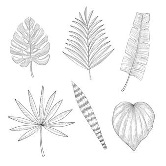 Zestaw tropikalnych liści w stylu doodle wyciągnąć rękę