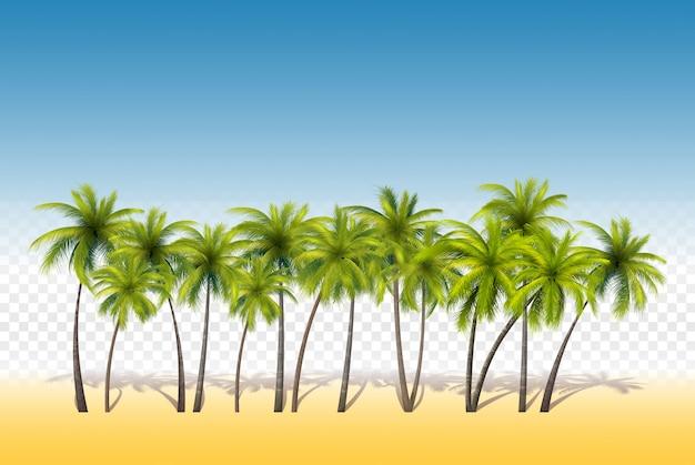 Zestaw tropikalnych palm