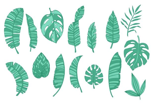 Zestaw tropikalnych zielonych liści na białym tle