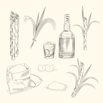 Zestaw trzciny cukrowej
