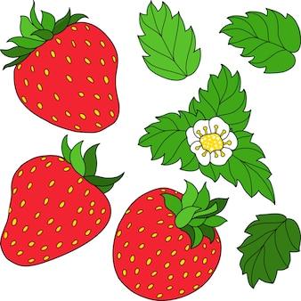 Zestaw trzech czerwonych dojrzałych truskawek zielonych liści i ilustracji wektorowych biały kwiat