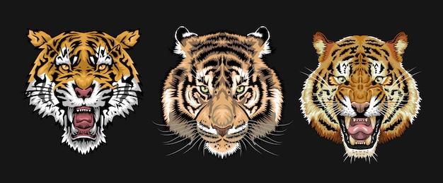 Zestaw twarzy tygrysa