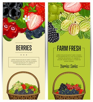 Zestaw ulotki farmy świeżych jagód