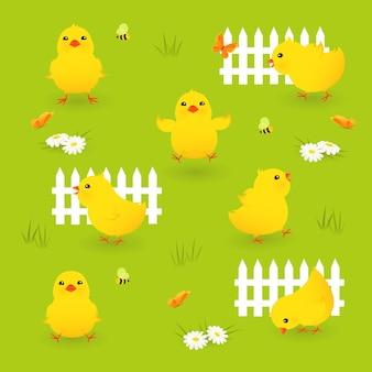 Zestaw uroczych kurczaków