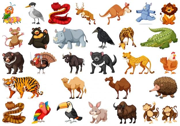 Zestaw uroczych zwierzątek