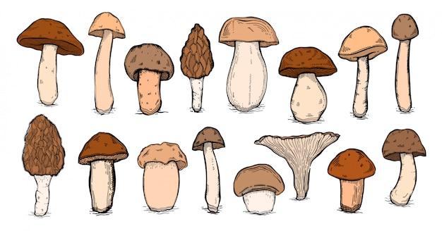 Zestaw vintage grzybów. ręcznie rysowane styl szkic. organiczny produkt wegetariański.