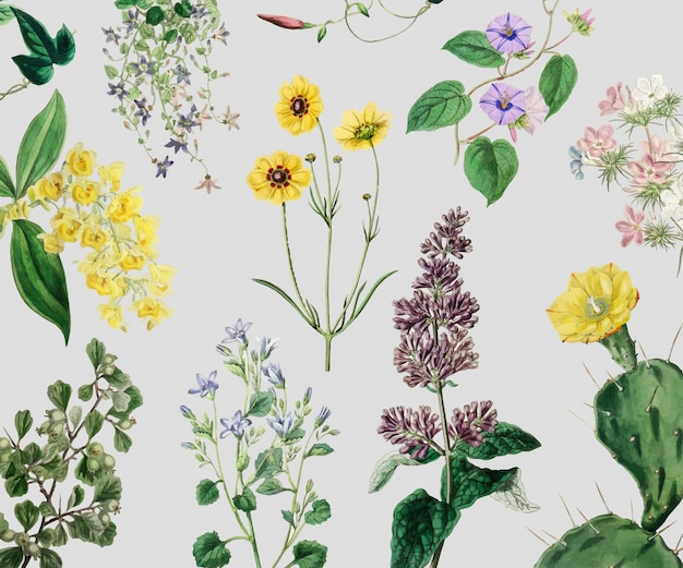 Zestaw vintage kwiat