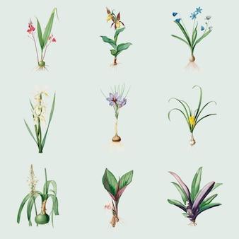 Zestaw vintage kwiatów lilii