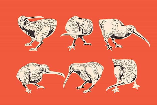 Zestaw vintage rysunek ręka ptaka kiwi