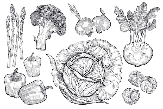 Zestaw warzyw. grafika w stylu vintage.