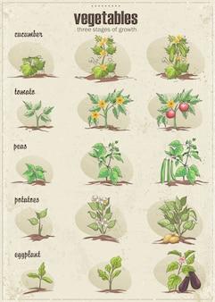 Zestaw warzyw z trzema etapami ich wzrostu. zestaw 2