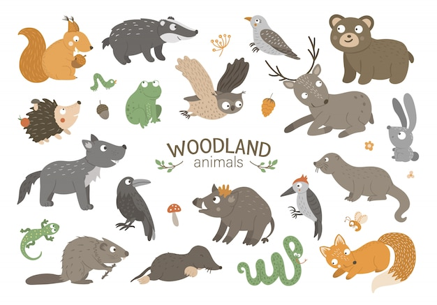 Zestaw wektor ręcznie rysowane płaskich zwierząt leśnych. zabawna kolekcja zwierzęca