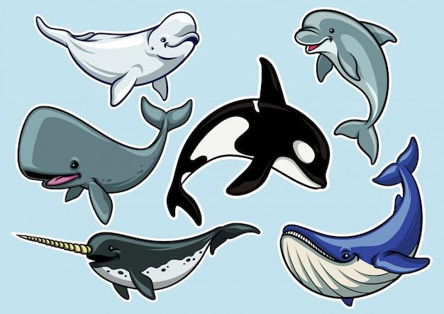 Zestaw wesoły różnych wielorybów