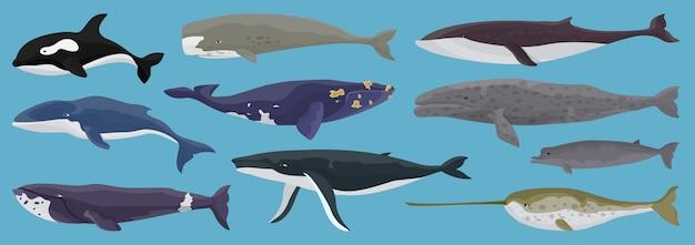 Zestaw wielorybów morskich