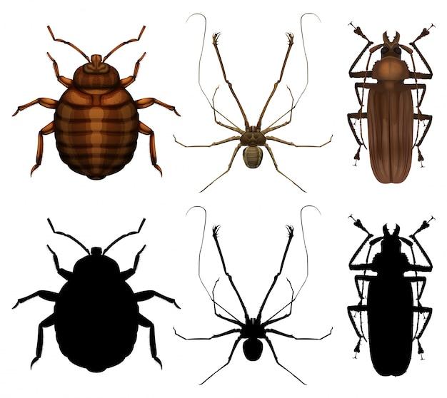 Zestaw wielu owadów