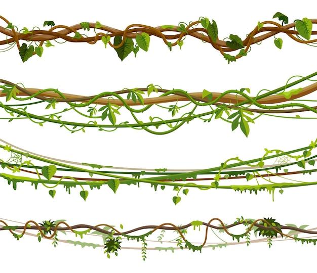Zestaw winorośli dżungli lub ilustracji roślin liana skręconych