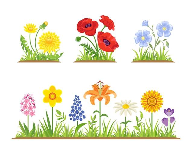 Zestaw wiosennych i letnich kwiatów z zieloną trawą.