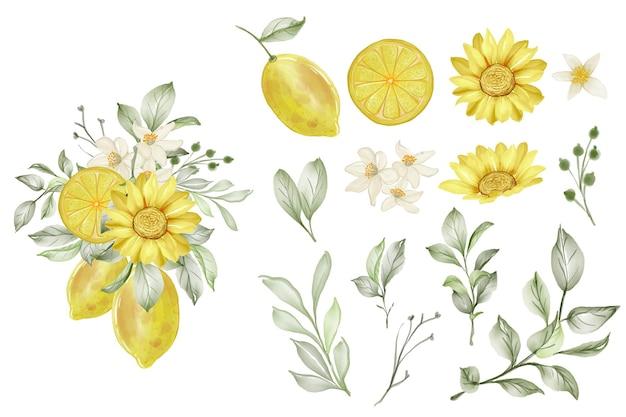 Zestaw wiosennych kwiatów cytryny i liści na białym tle clipart
