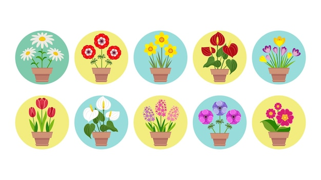 Zestaw wiosennych kwiatów ogrodowych w doniczkach.